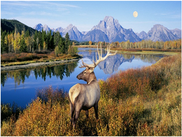 13-Day Yellowstone National Park, Mt. Rushmore, West Grand Canyon and San Francisco Tour from Los Angeles/Las Vegas