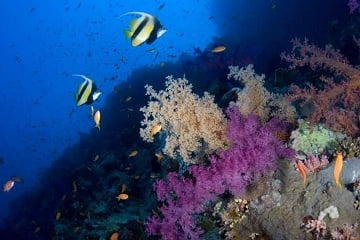 8-Day Red Sea Diving tour from Eilat/Amman