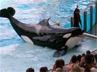 10-Day Miami, Everglade Park, Key West, West Palm Beach, Orlando Theme Parks Luxury Tour from Orlando