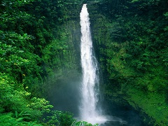 1-Day Akaka Falls and Lava Tree National Park Tour