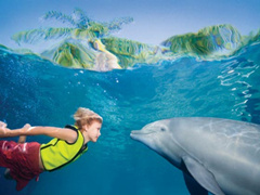 1-Day San Diego Sea World Tour from Los Angeles