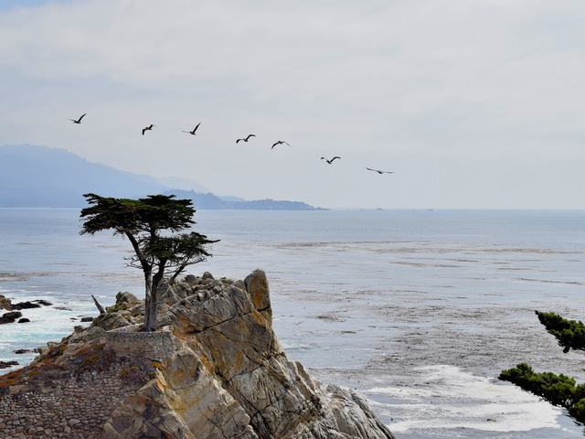 The Lone Cypress Tree, 17 Mile Drive