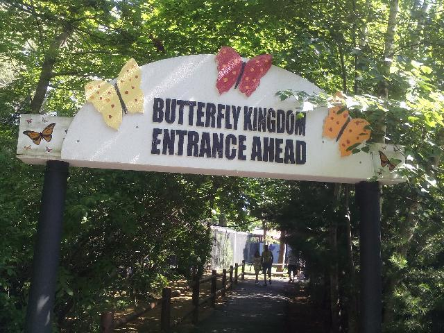 York's butterfly kingdom