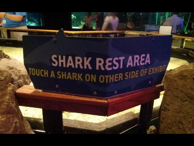 Visitors have the chance to touch sharks in this area of Mystic Aqarium