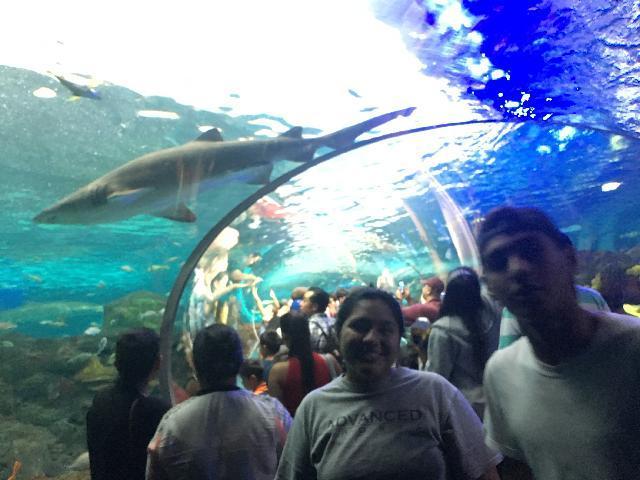 """Ripley""""s Aquarium"""