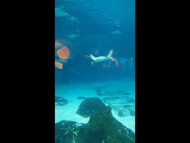 At Aquatic Adventure