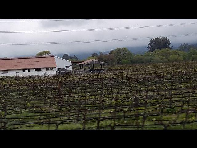 old Napa Valley