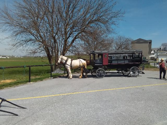 Buggy Ride at the Amish Village
