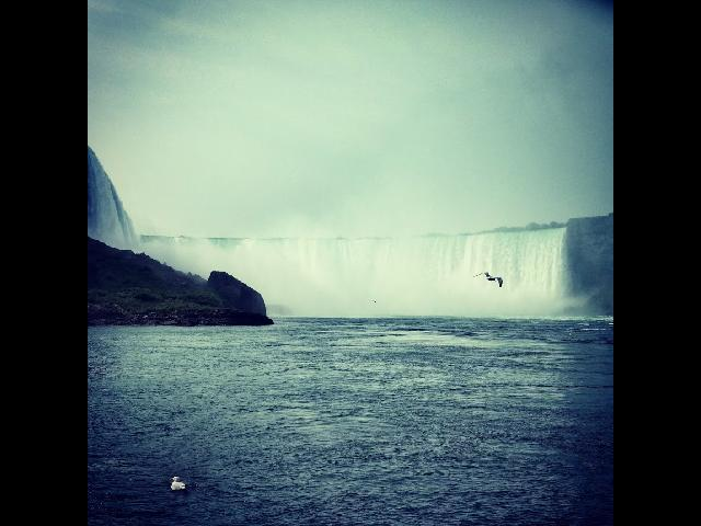 Niagara and seagulls
