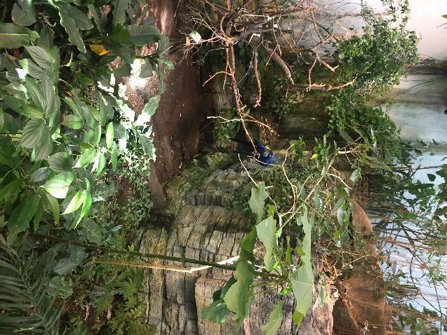 Monteral Botanical garden