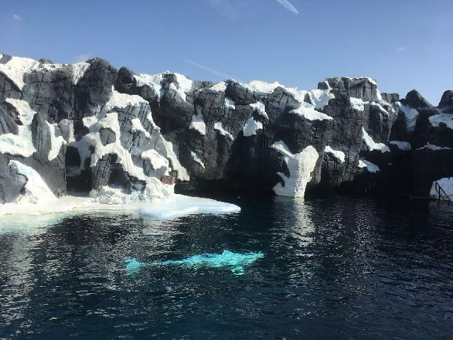 Wild Artic at SeaWorld