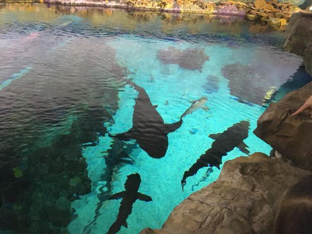 Shark Tank at SeaWorld
