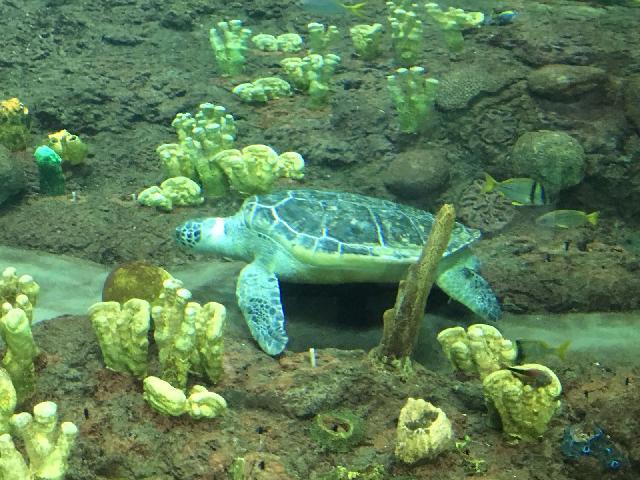 Turtle Reef at SeaWorld