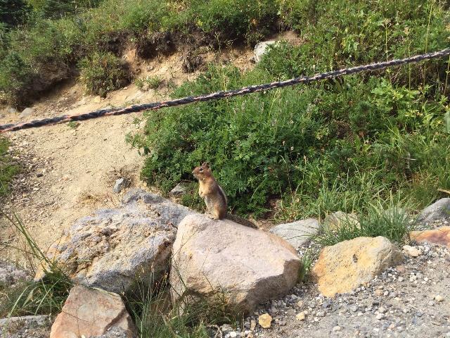 Chipmunk on trail of Mt. Rainier