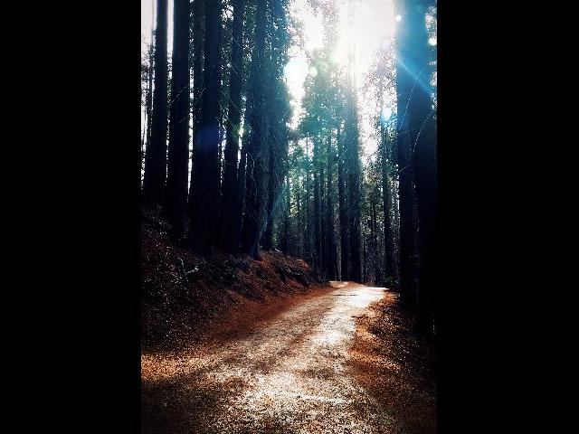 Grand sequoia hike