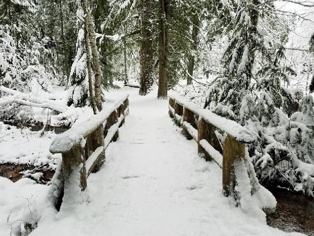 longmire mt rainier national park