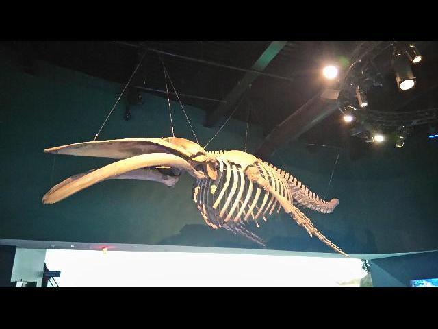Prehistoric fosils at the Toronto aquarium