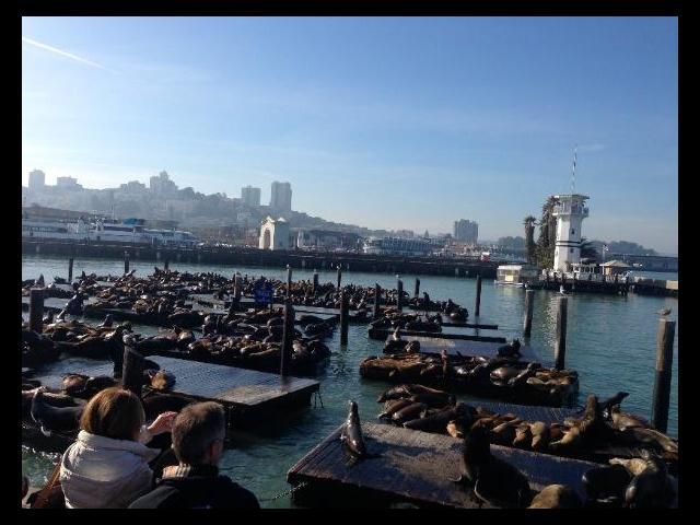 Penguins at Fisherman's Wharf, San Francisco