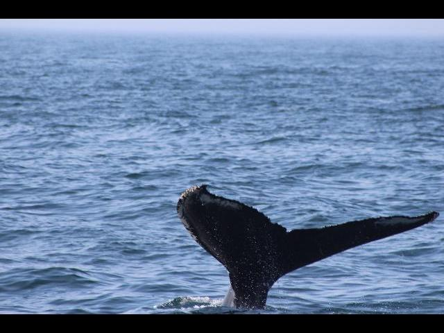 A GOOD EXPERIENCE WITH THE WHALES.