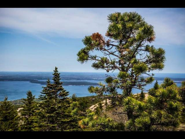 acadia national park, maine