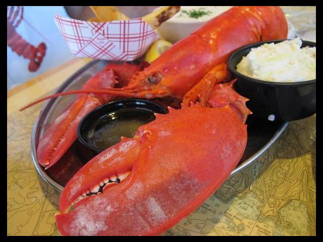 Maine's Lobster