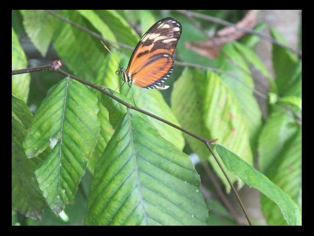 York Wild Kingdom- Butterfly