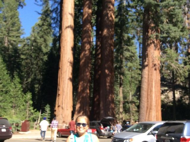 Happy Family tree at Sequoia Park.