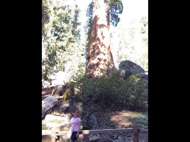 At Sequoia Park