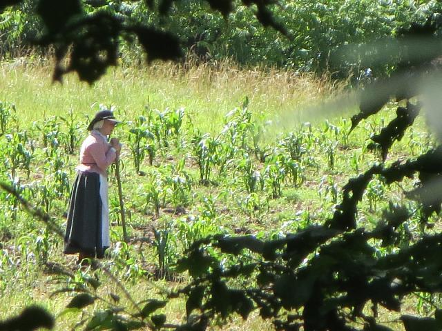 Pilgrim woman farming the corn field at the Plimoth Plantation living history museum in Plymouth, Massachusetts, USA