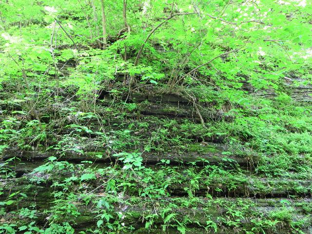 Green foliage at Watkins Glen State Park, Finger Lakes, New York, USA