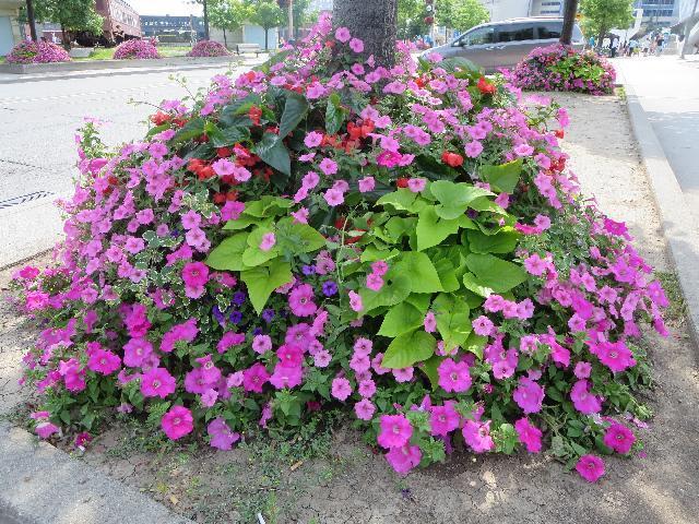 Canadian summer flower bed in Toronto, Ontario, Canada