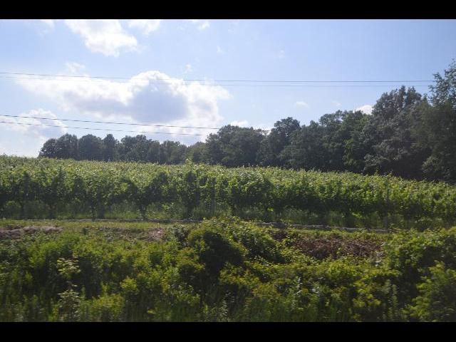 Wine Vineyard in Finger Lakes, New York state, USA