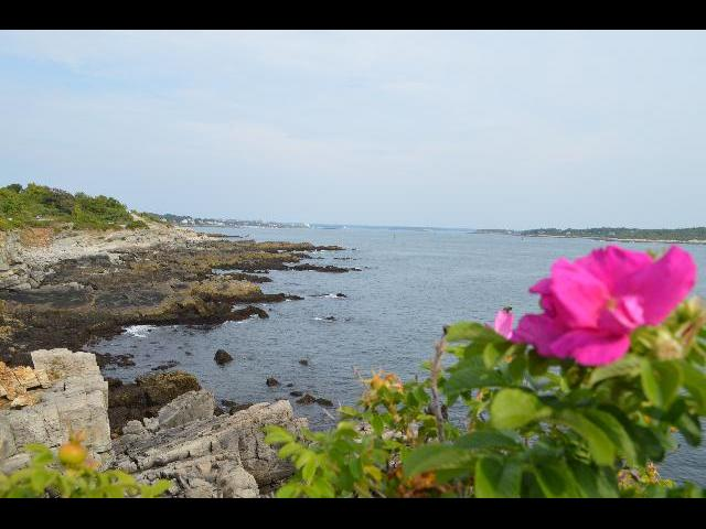 New England pink summer flowers at the Portland Head Light historic lighthouse in Cape Elizabeth, Maine, USA