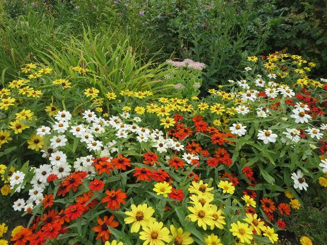 Summer New England flowerbed in Maine, USA