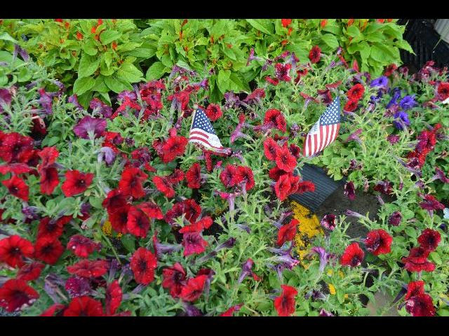 Summer garden decorated for the Fourth of July with the flag of the United States of America in Provincetown, Cape Cod, Massachusetts, New England, USA