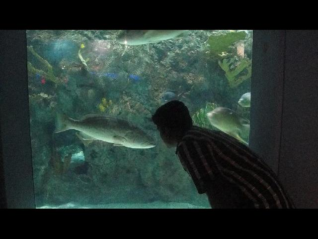 At Mystic Aquarium