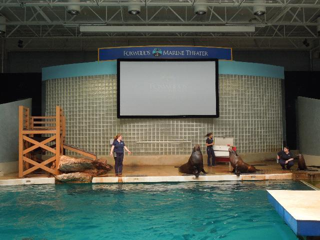 Sea Lion Show at the Mystic Aquarium in Mystic, Connecticut