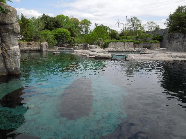 Whales at the Mystic Aquarium in Mystic, Connecticut