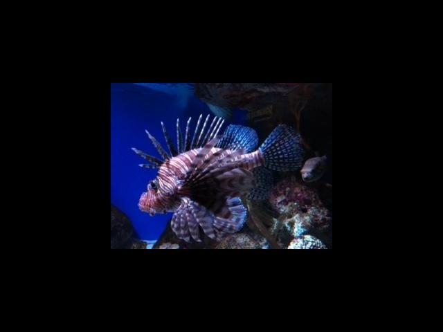 新英格兰水族馆
