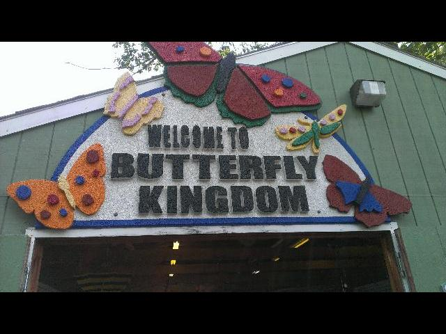 Butterfly Kingdom