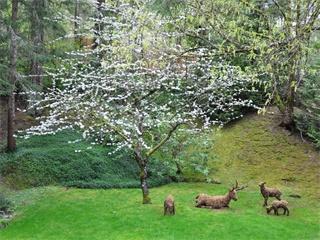 8日游-落基山班芙国家公园-哥伦比亚冰原-露易斯湖-基隆拿-维多利亚-惠斯勒-温哥华(温哥华接机)