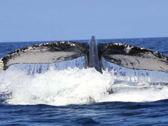 3-hour Whale Watch Tour