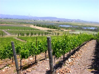 1-Day Wine Lovers Wine Country Tour from San Francisco