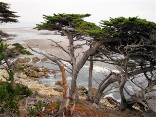 1-Day Carmel and Monterey Tour from San Francisco