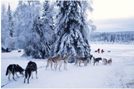 Alaska Dogsled Tour from Fairbanks