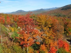 1-Day Washington Mountain Maple Tour from Boston