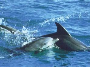 1-Day Port Stephens, Wildlife, Dunes & Dolphins Tour from Sydney