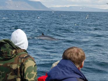 Whale Watching Half-Day Tour from Reykjavik