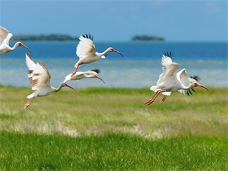 3-Day Miami, Everglades Park Tour from Orlando