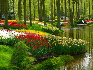 2-Day Holland Tulips Tour from Paris